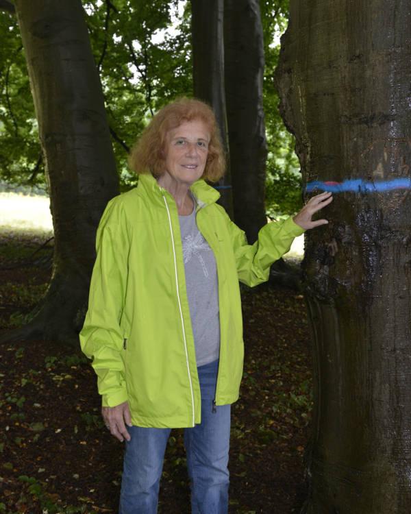 De blauwe streep op deze beuk geeft aan dat deze boom gered is van de kap. Bea Peeters van natuurorganisatie IVN Rijk van Nijmegen wil dat GLK helemaal stopt met houtwinning op de Heerlijkheid Beek.